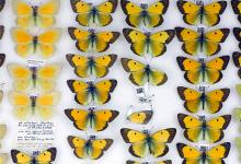 http://www.nhm.ac.uk/our-science/collections/entomology-collections/lepidoptera-collections.html
